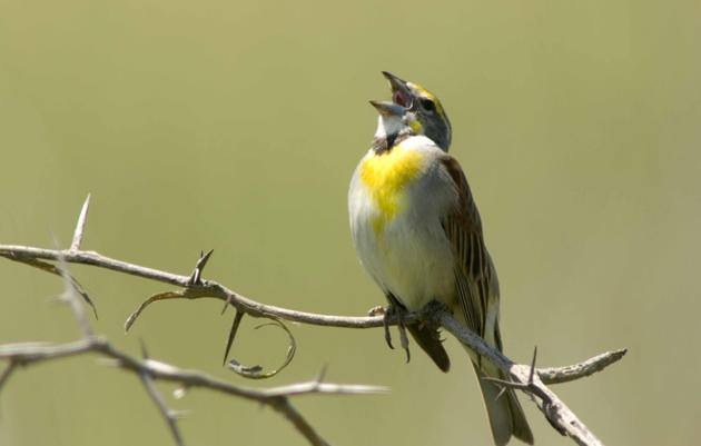 Help Support Audubon Nebraska