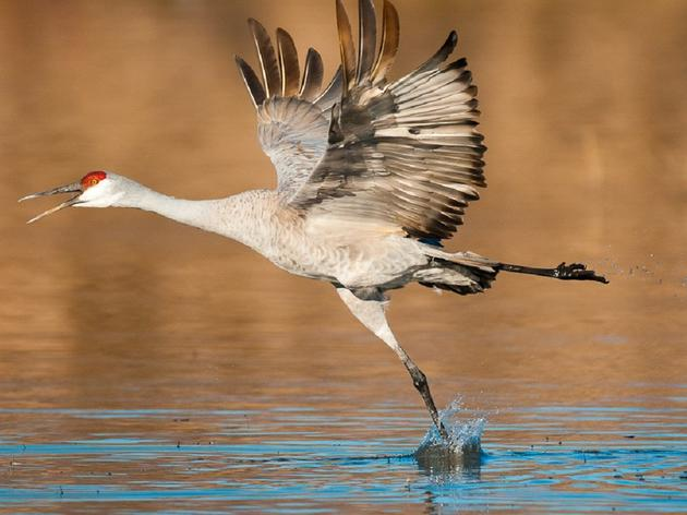 Weather Impacts Crane Numbers
