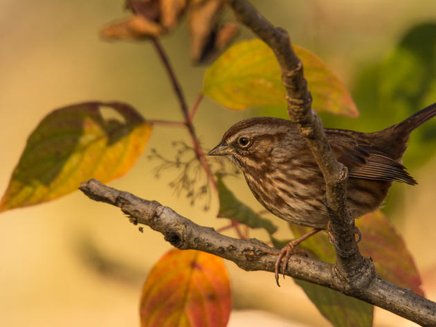 Autumn Animals: Adapting to the Change in Seasons