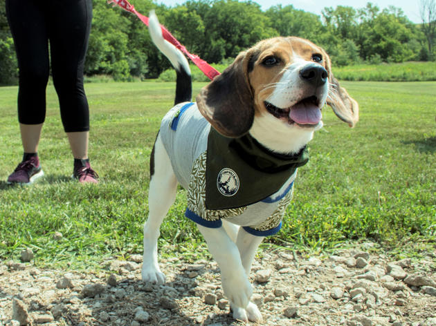 Furry Friends Welcome on the Tallgrass Prairie on August 10