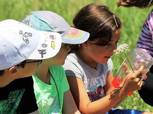 2-to-1 Challenge Grant Could Offer Expanded Summer Camp Programs