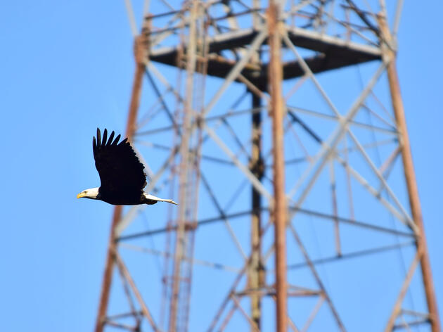 Bird Safety a Concern in National Push to Build More Power Lines